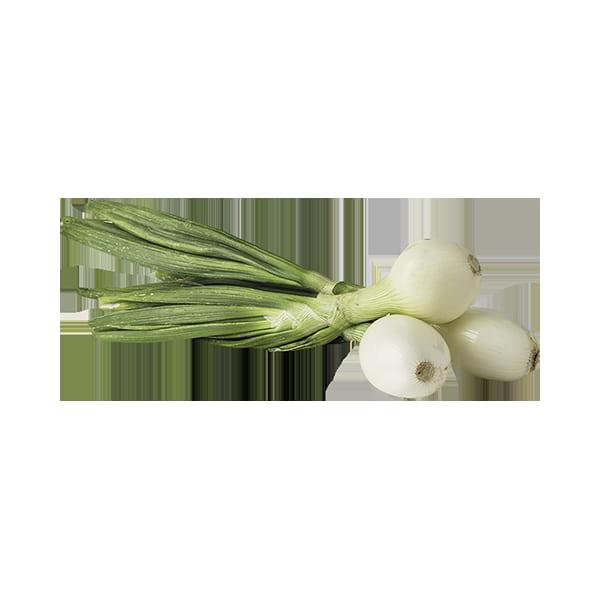 Cebolleta tierna Manojo