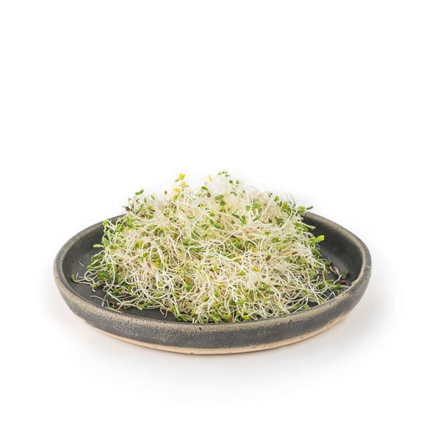 Germinado de alfalfa 70g ECO