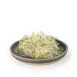 Germinado fresco de alfalfa 70g