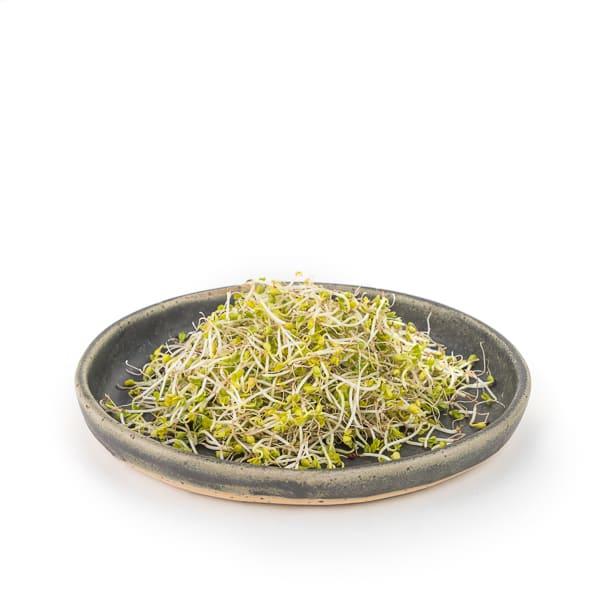 Col Kale germinada 70g ECO