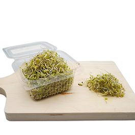 Semillas Germinado Alfalfa ECO
