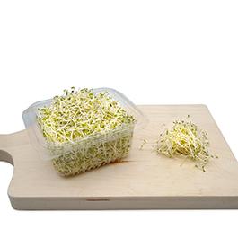 Semillas Germinado Brócoli ECO