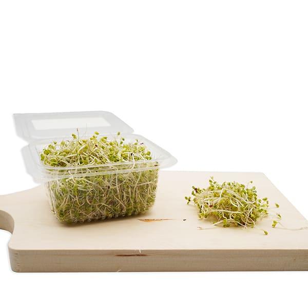 Semillas de Germinado de Kale ECO